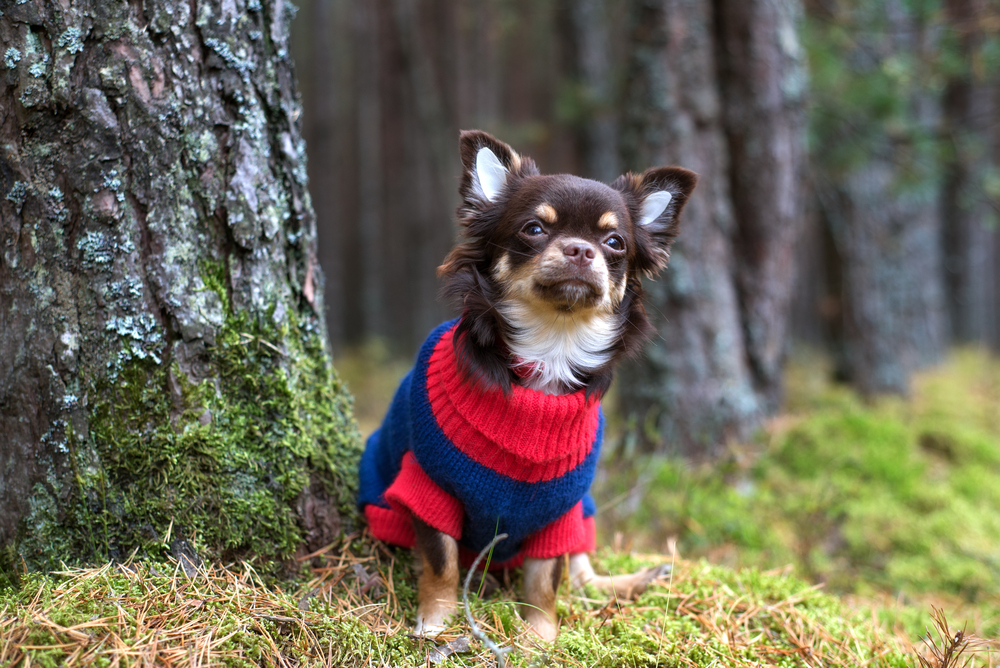 Warm dog in sweater